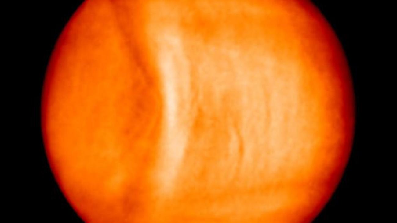 Venus y sus Ondas