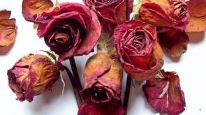 rosas-marchitas