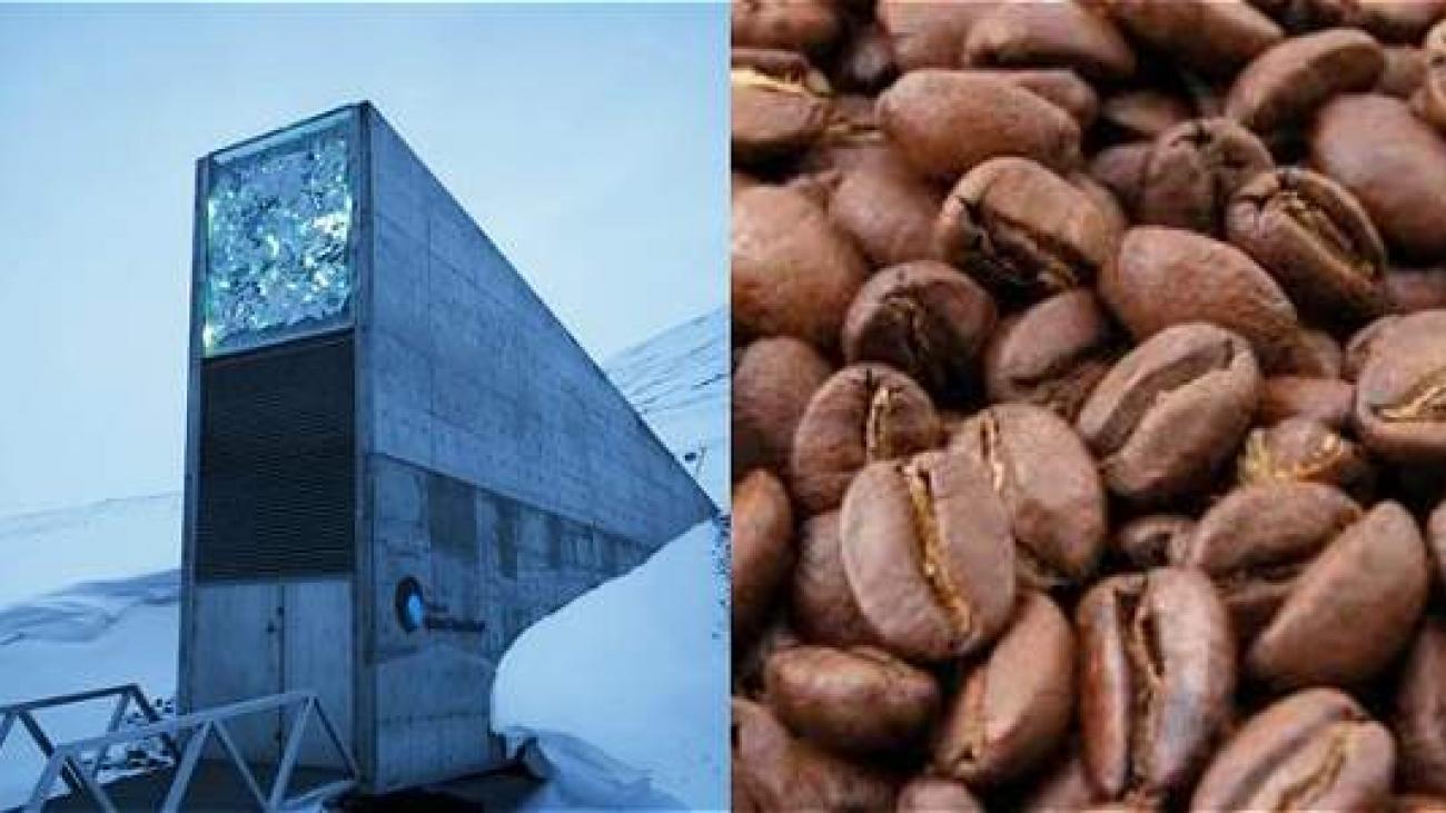 Foto: AFP / Archivo particular  La Bóveda Global de Semillas en el Ártico donde habrá café colombiano
